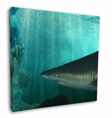 "Shark Photo 12""x12"" Wall Art Canvas Decor, Picture Print, AF-SHA1-C12"