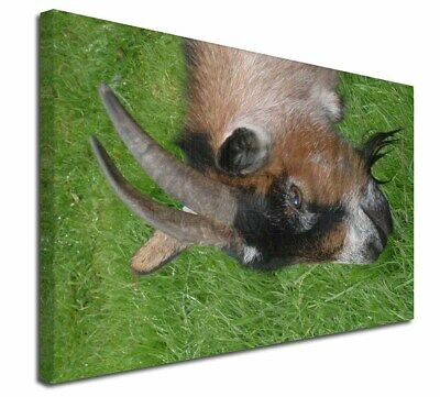 """Cheeky Goat 30""""x20"""" Wall Art Canvas, Extra Large Picture Print Deco, AGO-1-C3020"""