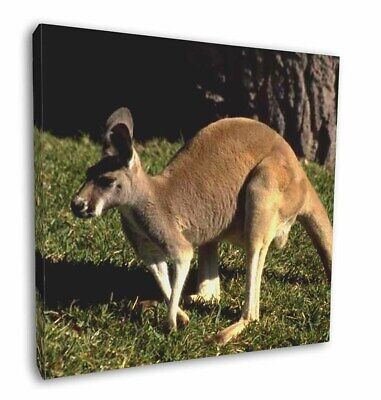 "Kangaroo 12""x12"" Wall Art Canvas Decor, Picture Print, AK-2-C12"