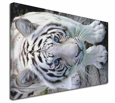 "Siberian White Tiger 30""x20"" Wall Art Canvas, Extra Large Picture P, AT-14-C3020"