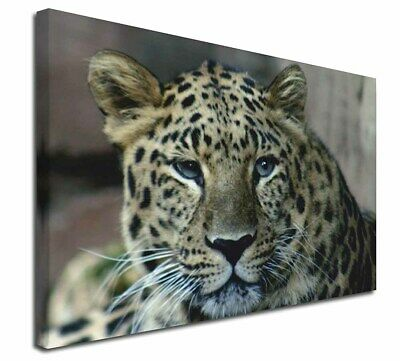 """Extra Large Picture AT-47-C3020 Beautiful Snow Leopard 30/""""x20/"""" Wall Art Canvas"""