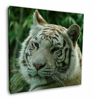 "Siberian White Tiger 12""x12"" Wall Art Canvas Decor, Picture Print, AT-50-C12"