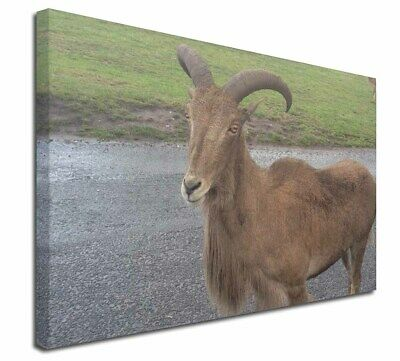 """Cute Nanny Goat 30""""x20"""" Wall Art Canvas, Extra Large Picture Print, GOAT-1-C3020"""