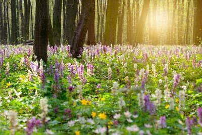Wildflower Woodland Mix Seeds, Wildflower Shade Mix - 20 grams- ONLY FLOWERS!