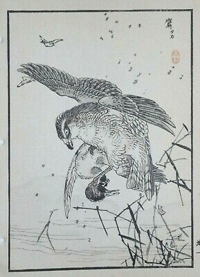 NORTHERN GOSHAWK : Print Of a 1880s JAPANESE WOODBLOCK Bird Print By BAIREI
