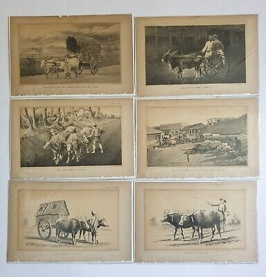 6pc x Lithographs CEYLON COW BULLOCK CARTS  - c1888  Julius Bien 9in x 6in (1)