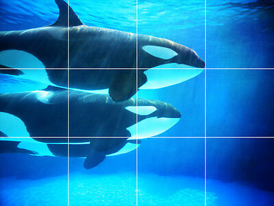 Killer Whales Orcas Tropical Fish Ocean Water Cotton Fabric Print BTY D679.45