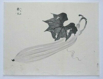 'KYURI' CUCUMBER OR GOURD - MEIJI JAPANESE WOODBLOCK PRINT By GYOKUSHO