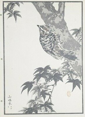 JAPANESE WOODPECKER : Print Of a 1880s JAPANESE WOODBLOCK Bird Print By BAIREI