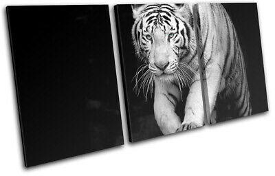 Wild Tiger White Siberian Bengal Animals TREBLE CANVAS WALL ART Picture Print