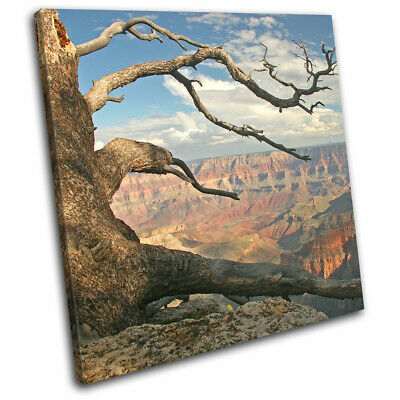 Grand Canyon Arizona USA Tree  Landscapes SINGLE CANVAS WALL ART Picture Print