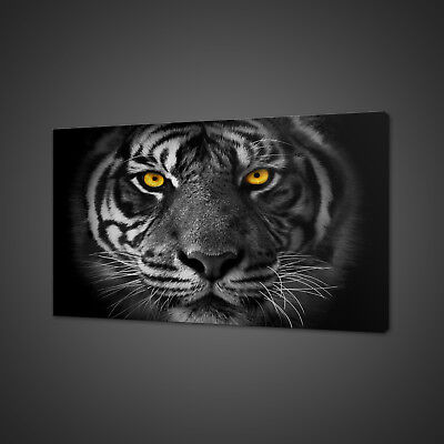 Beautiful Eyes Of The Tiger Box Mounted Canvas Print Wall Art Picture Photo
