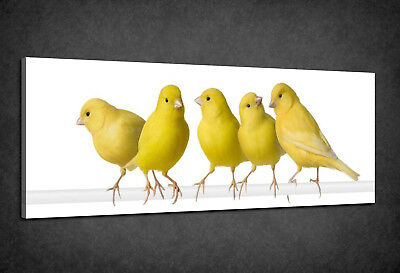 Beautiful Flock Of Yellow Canary Birds Box Canvas Print Wall Art Picture