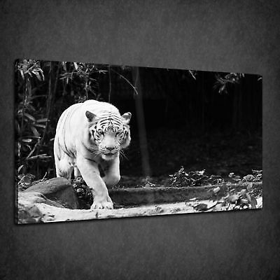 White Bengal Tiger Wild Cat Animal Box Canvas Print Wall Art Picture