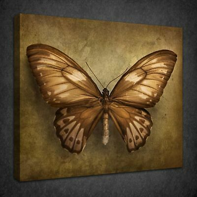 Beautiful Vintage Butterfly Retro Box Canvas Print Wall Art Picture