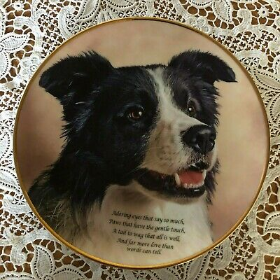 Border Collie Dog Plate Poetry Of The Border Collie Adoring Eyes Perfect