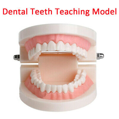 Dental Teaching Teeth Model Caries Tooth Care Education Dentist Equipmen New