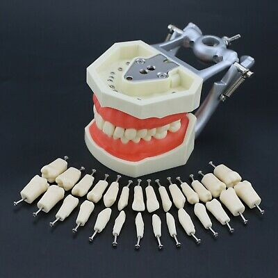 Kilgore Nissin 200 Type Dental Typodont Model Removable 28PCS Screw-in Teeth