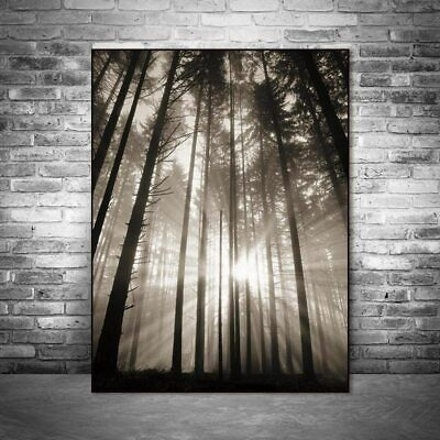Sun Forest Nordic poster Abstract Wall Pictures Living Room Landscape Art Decor