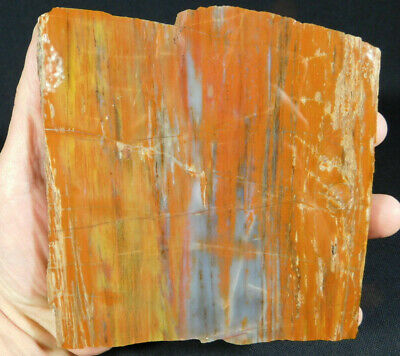 A BIG! Very Colorful Polished Petrified Wood Fossil Found in Arizona! 794gr e