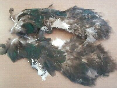 Blue Indy Peacock Cock Belly Chest Pelt Hide Skin Feathers TT29