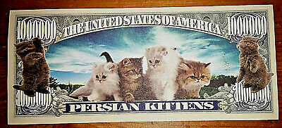 Cats & Kittens Novelty Bank Note Persian Lovers Pets Animals Lovely Present Idea