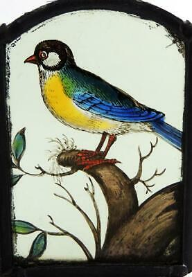 BLUE TIT BIRD STAINED GLASS PANEL 17th CENTURY