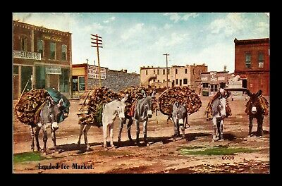 Dr Jim Stamps Us Loaded For Market Donkeys Topical View Postcard