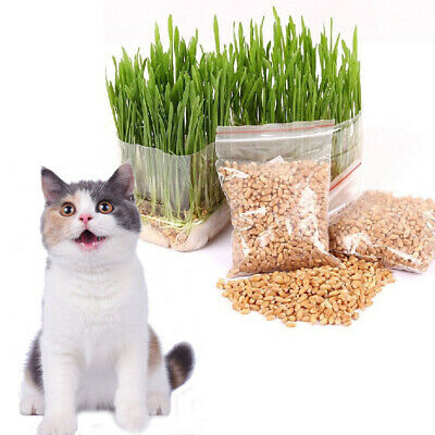150g Sweet Oat Cat Grass Seeds Organic Grow Cats and other Pets Diet Health UK