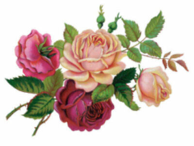 Vintage Image Victorian Shabby Pink Red Rose Bouquet Waterslide Decals FL350