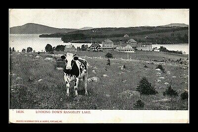 Dr Jim Stamps Us Rangeley Lake Cow Postcard Maine Made In Germany