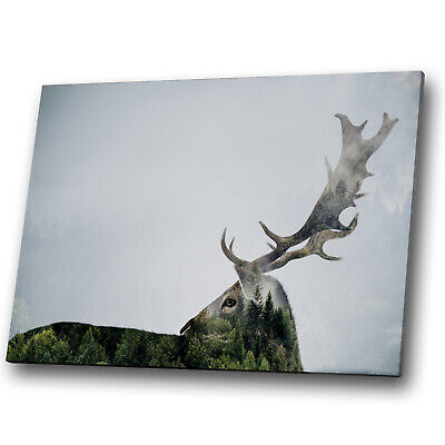 Animals Stag in Grass   BOX FRAMED CANVAS ART Picture HDR 280gsm
