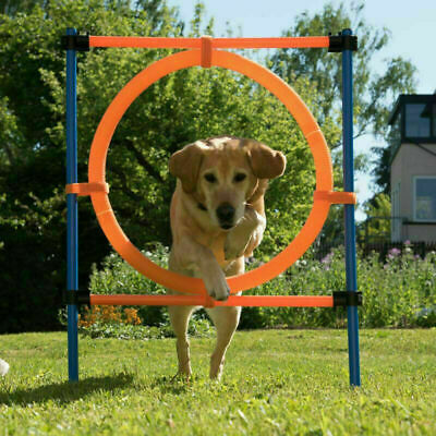 12-piece Set Fun Sport Complete Dog Agility Course Outdoor Training Equipment