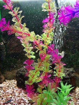 Fish tank BIORB NANO TYPE ETC LAST ONE  *PLASTIC PLANT 1 X LARGE  ****NEW