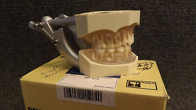 Kilgore I6D-400J Gigival Soft Silicone Tooth Model NEW Typodont 200