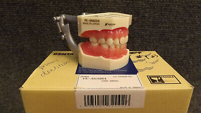 Kilgore I3D-400D (PE-ANA004) Primary Anatomical Tooth Model NEW Typodont 200