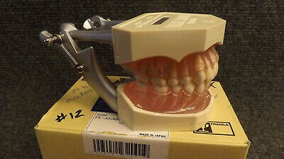 Kilgore I21D-400G Transparent Gingivae Tooth Anatomy Model NICE !! Typodont 200