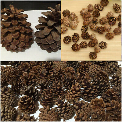 Natural Dried Flowers Pine Cones Ornament Christmas Tree Decor Party DIY Gift