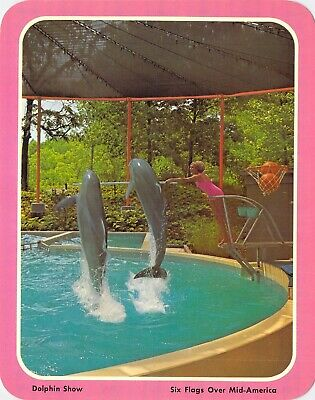 postcard BIG 5.25x6.75 DOLPHIN SHOW - Six Flags Over Mid-America MO