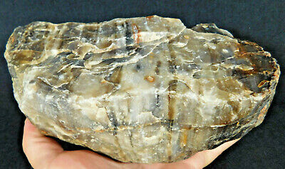 Nice Growth Rings A BIG! 225Million Year Old Petrified Wood Fossil Utah 3265gr e