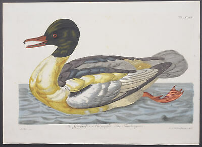 Pennant - Goosander. 93 - 1771 British Zoology FOLIO Engraving