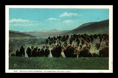 Dr Jim Stamps Us Buffalo Stampede Yellowstone National Park Postcard Creased