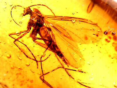 GENUINE FOSSILISED INSECT IN AMBER circa 44 million BC