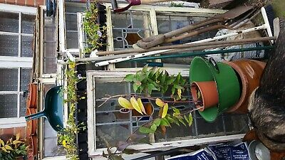 Stained Glass Antique Leaded Window With Top Opener , Various...