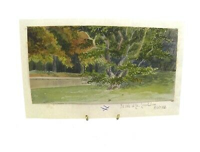 Antique 19th century English School watercolour painting Old Oak Lee Lemarkshire