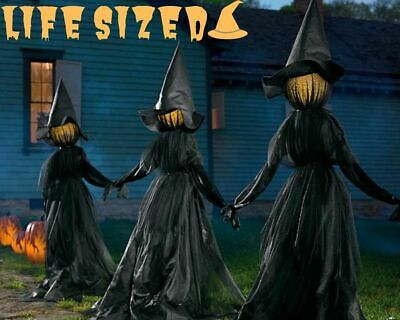 Holding Hands Witches, Set of Three Indoor/Outdoor Halloween Decor (59 x 71)