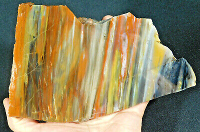 A Big! Polished 225 Million Year Old Petrified Wood Fossil From Arizona 967gr e