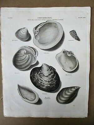 SCIENTIFIC PLATE CONCHOLOGY SHELL SEA ART POSTER PRINT LV3856