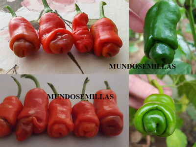 PIMIENTO EROTICO ( ORIGINALES  ) peter pepper  1000 Semillas seeds