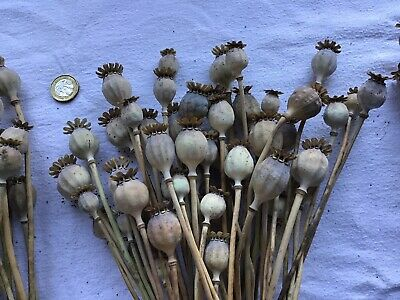 Poppy Seed Heads Dried 200